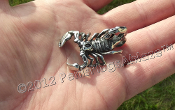 SOLID STAINLESS STEEL SCORPION PENDANT + NECKLACE