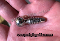 SNATCH SCREW CRAFTED WITH FEMALES IN MIND 10mm insert width